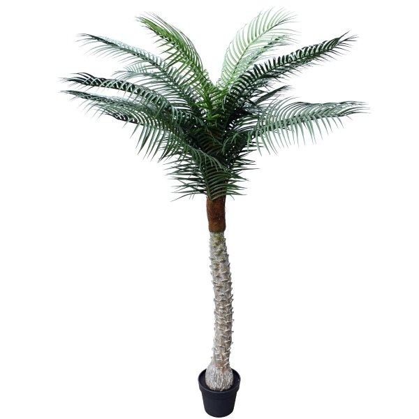 Tropical Phoenix Palm Tree 170cm UV Resistant