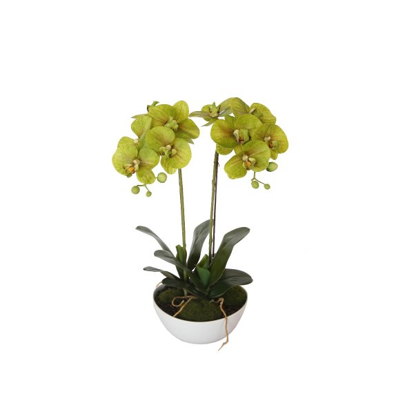 50cm Dual Butterfly Orchid - Cream